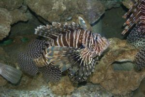 Sådan Treat fisk rygsøjlen giftstoffer