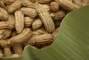 Ernæring Fakta om jordnødder