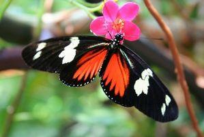 Berømte sommerfugl haver