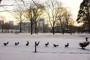 Ting at gøre i Boston i løbet af vinteren