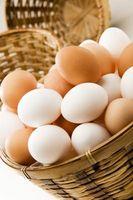 Sådan Pasterurize æg