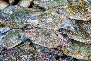 Krabbe & hummer festivaler
